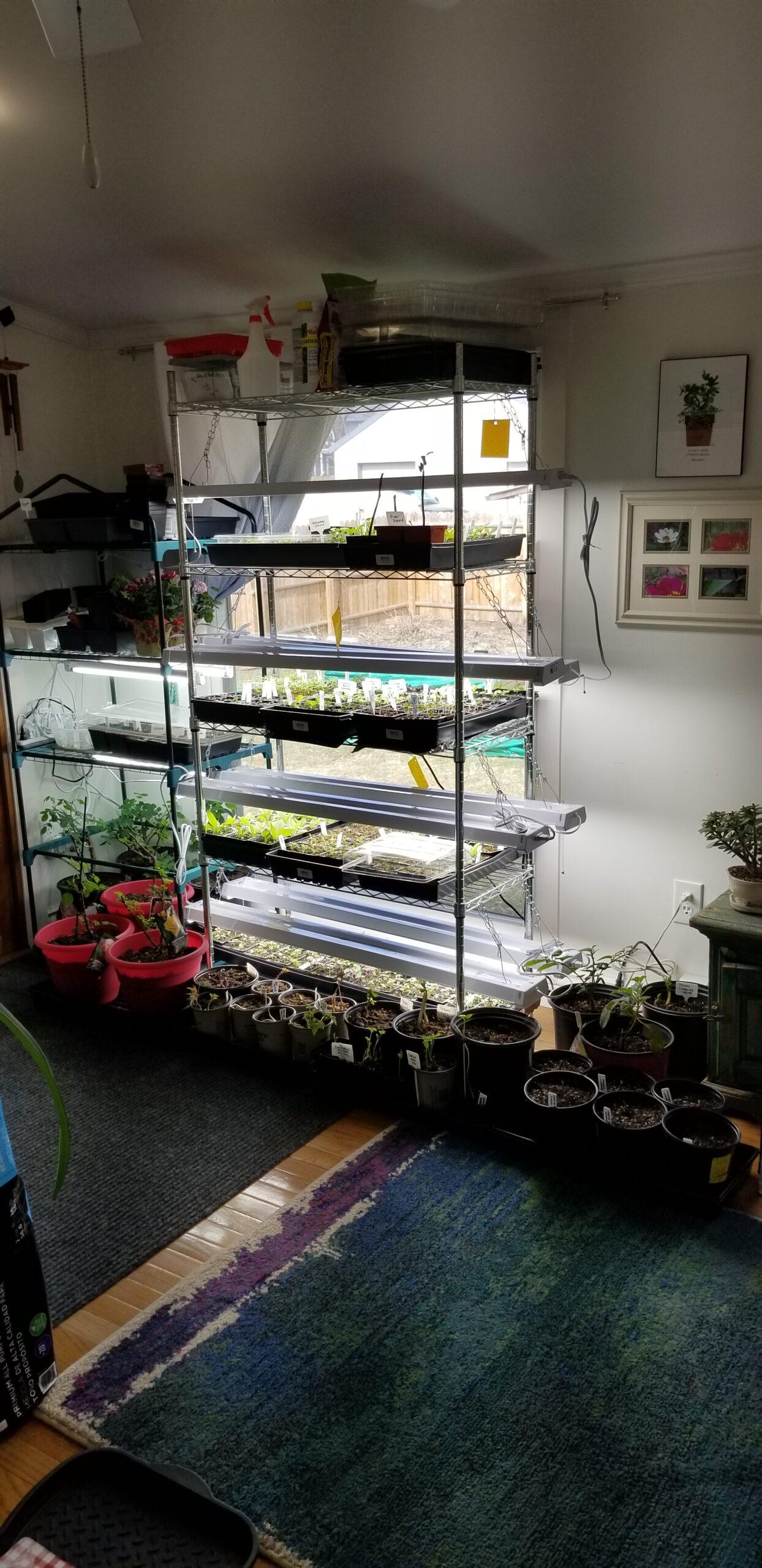 seed shelves 20210329